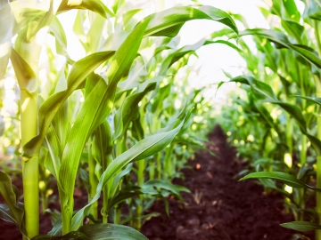 Charisma Agricultură
